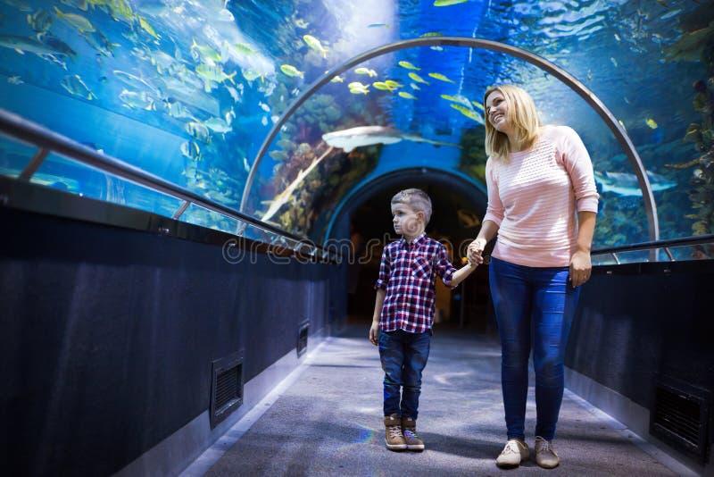 Hållande ögonen på havsliv för moder och för son i oceanarium royaltyfri fotografi