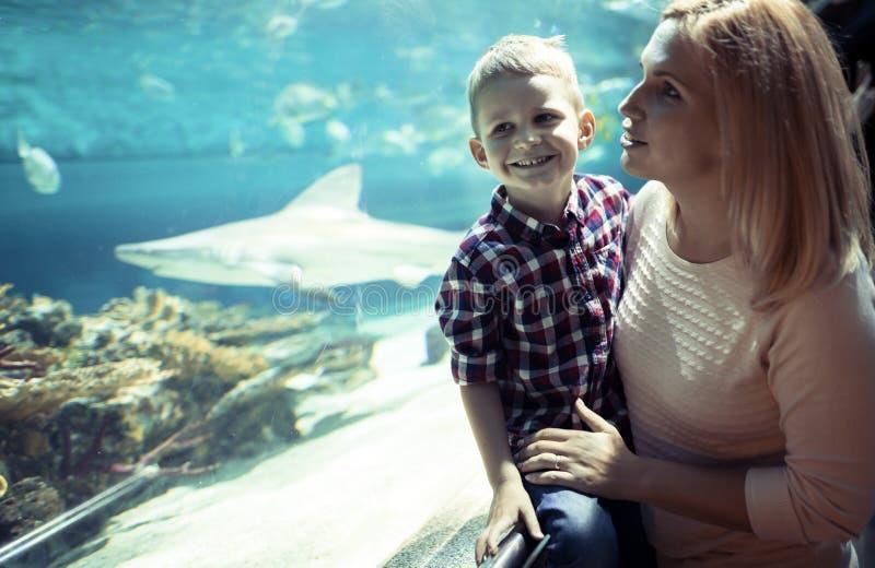 Hållande ögonen på havsliv för moder och för son i oceanarium fotografering för bildbyråer