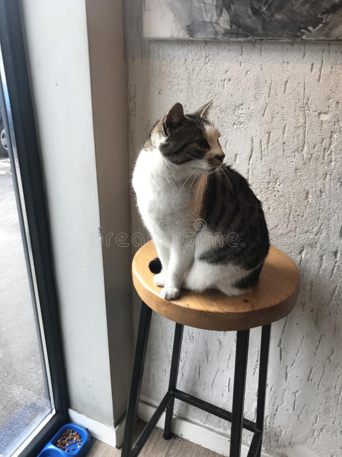 Hållande ögonen på katt royaltyfri bild