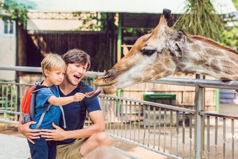 Hållande ögonen på och matande giraff för fader och för son i zoo Lyckliga ungemummel arkivbild