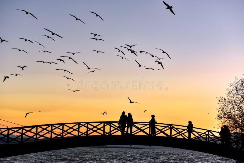 Hållande ögonen på seagulls för folk på solnedgången royaltyfri foto