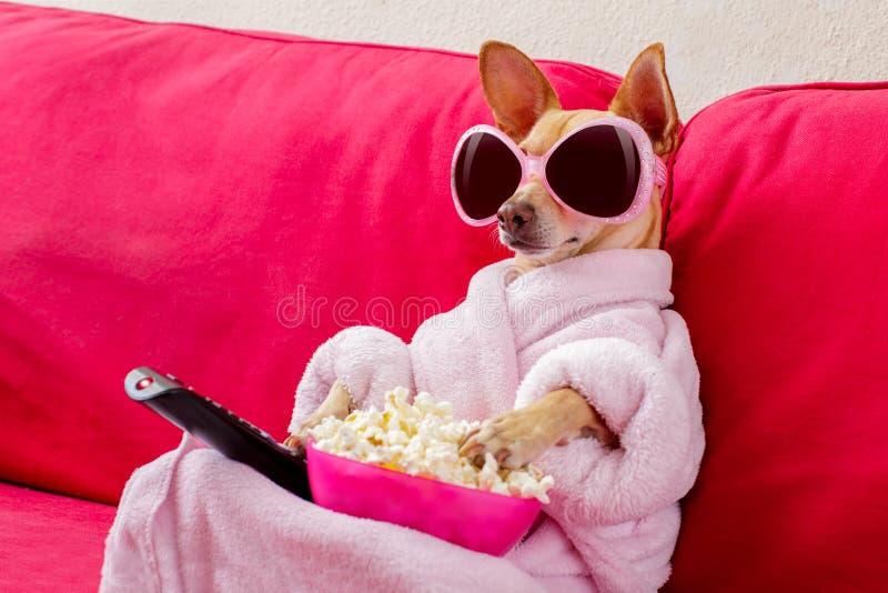 Hållande ögonen på tv för hund på soffan royaltyfri foto