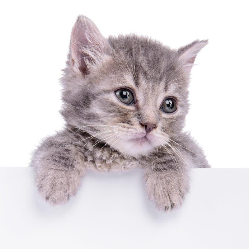 Hållande affischtavla för kattunge royaltyfri bild