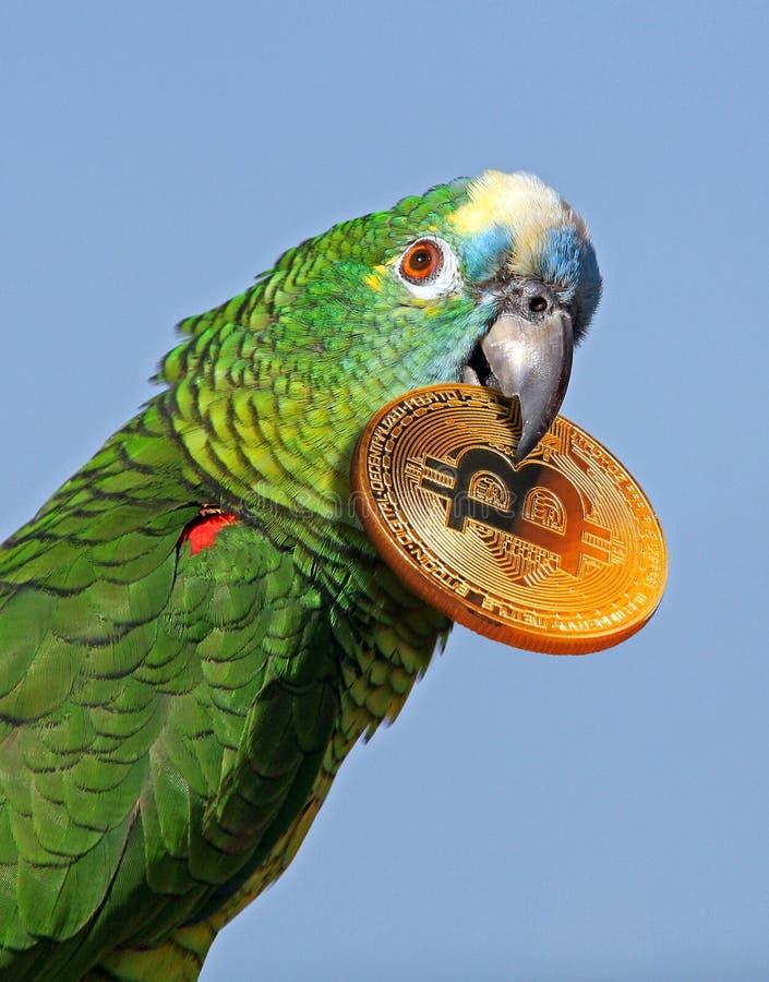 Hållande bitcoincryptocurrency för tropisk papegoja i näbb arkivbilder