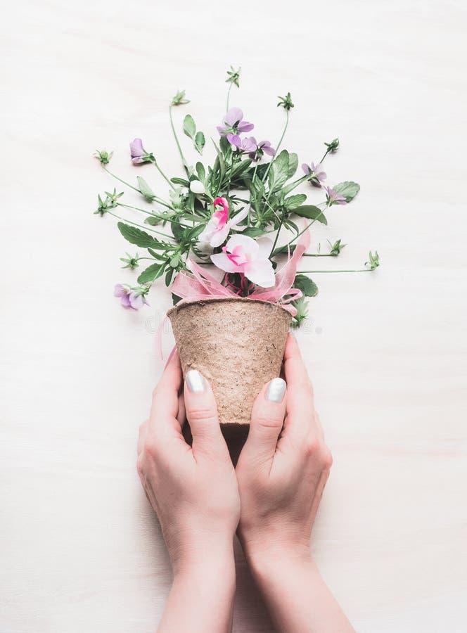 Hållande blommakruka för kvinnlig hand med blom- ordningar på vit träbakgrund Arbeta i trädgården och blommastilleben royaltyfria bilder