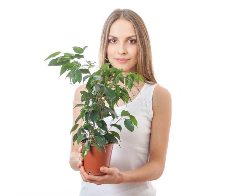 Hållande houseplant för ung kvinna, isolaterd på vit arkivfoto