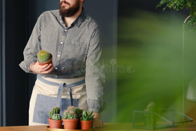 Hållande kaktus för trädgårdsmästare med suckulenter på tabellen, medan arbeta I royaltyfri foto
