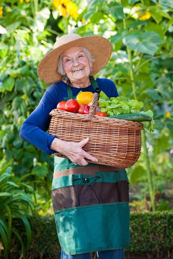Hållande korg för lycklig äldre kvinna av grönsaker fotografering för bildbyråer