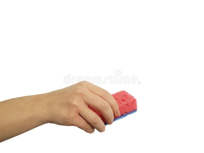 Hållande lokalvårdsvamp för kvinnlig hand som isoleras på vit bakgrund royaltyfria bilder