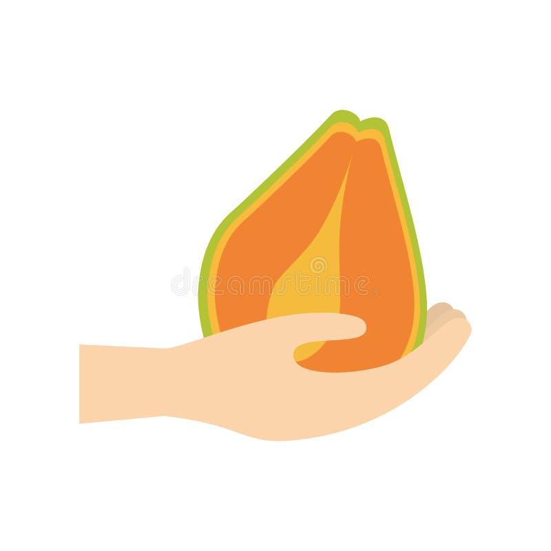 hållande papayafrukt för hand stock illustrationer
