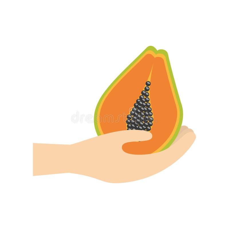 hållande papayafrukt för hand vektor illustrationer