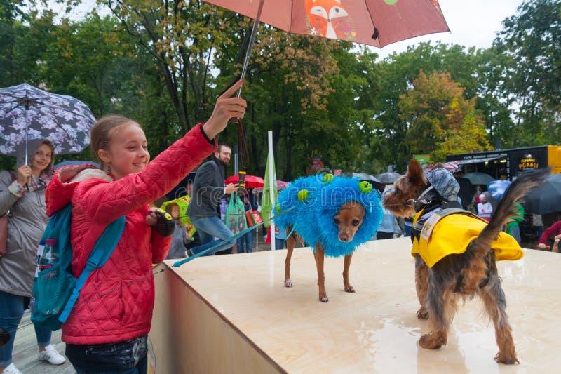 Hållande paraply för flicka över liten hundkapplöpning 16 09 2018 arkivbild