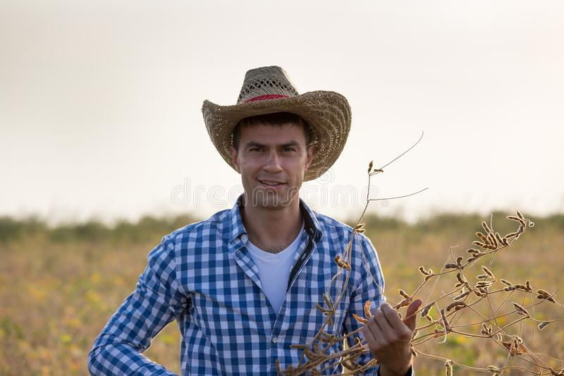 Hållande sojabönastammar för bonde i fält royaltyfria bilder