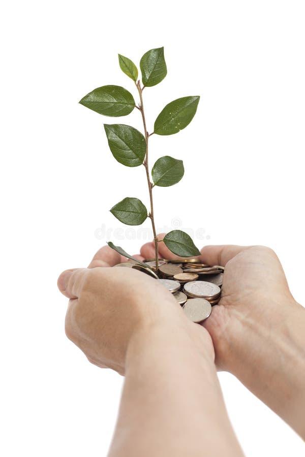 Hållande träd för hand som växer på mynt piggy sättande sparande för grupppengar fotografering för bildbyråer