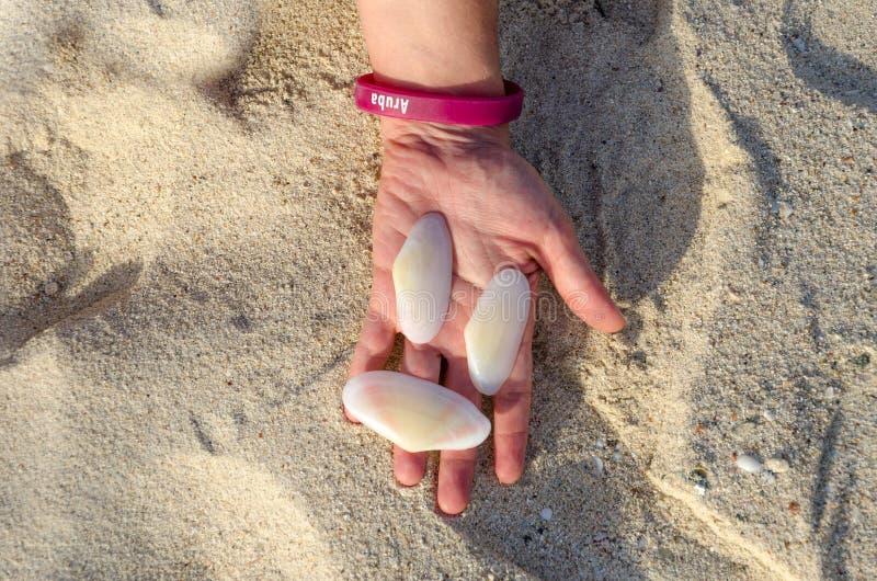 Hållande vita stora skal, i att räcka i Aruba royaltyfri foto