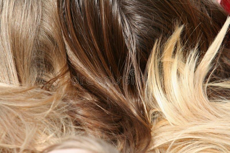 hår arkivfoton