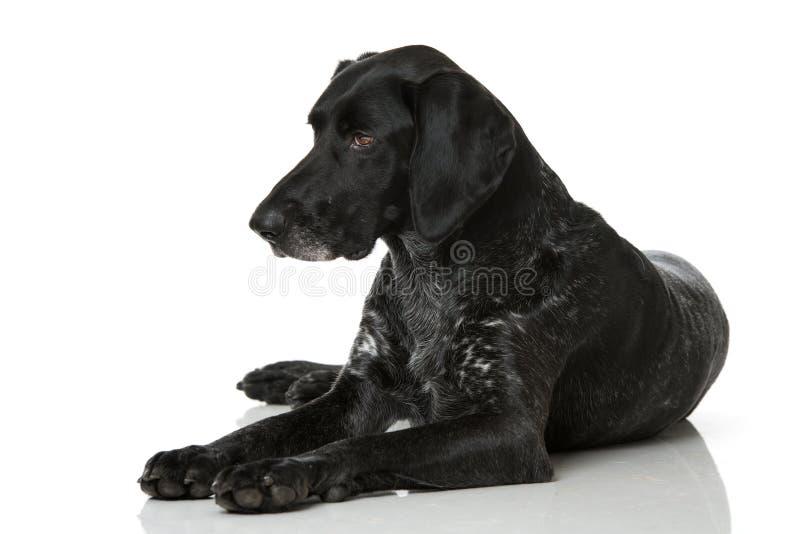 hår för hund för clipping 3d tyskt över white för kortslutning för banaframförandeskugga arkivfoton