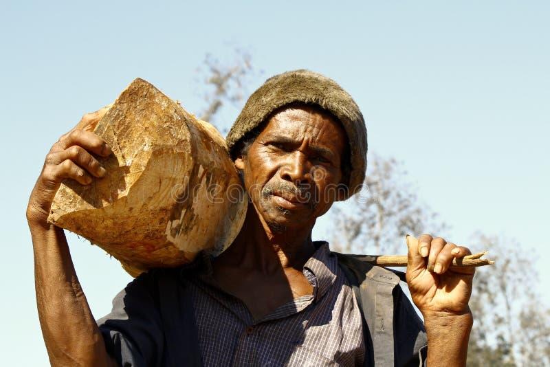 Hård funktionsduglig man som bär en trädstam - MADAGASCAR arkivfoton
