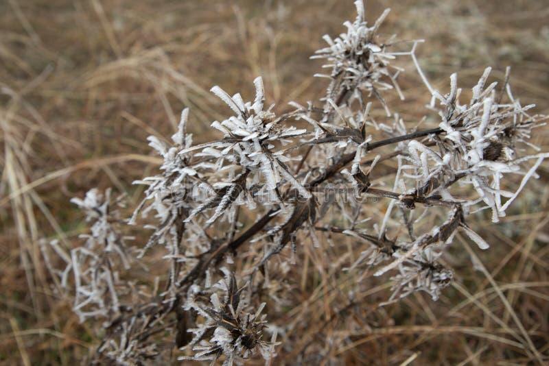 Hård rimfrost, djupfryst landskap för trädvinterunderland Dimma- och mistbakgrund, naturligt träd djupfrysta sidor som fryser dim royaltyfri fotografi