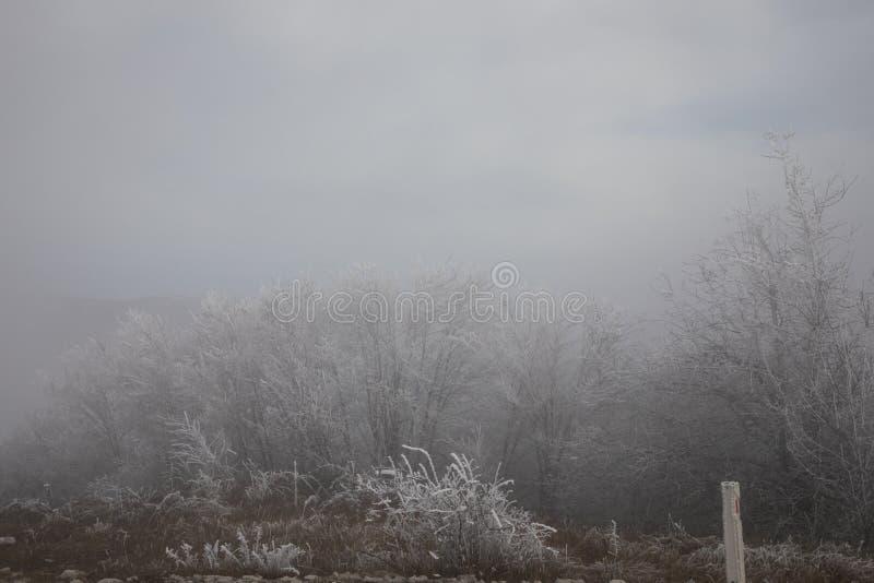 Hård rimfrost, djupfryst landskap för trädvinterunderland Dimma- och mistbakgrund, naturligt träd djupfrysta sidor som fryser dim arkivfoto