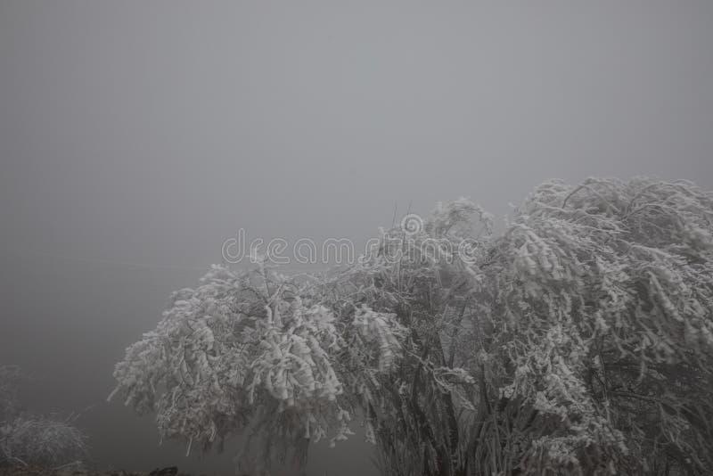 Hård rimfrost, djupfryst landskap för trädvinterunderland Dimma- och mistbakgrund, naturligt träd djupfrysta sidor som fryser dim arkivbild