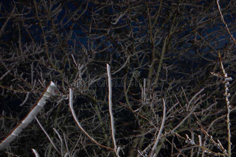 Hård rimfrost, djupfryst landskap för trädvinterunderland Dimma- och mistbakgrund som fryser dimma fuktighet som bildar is royaltyfria bilder
