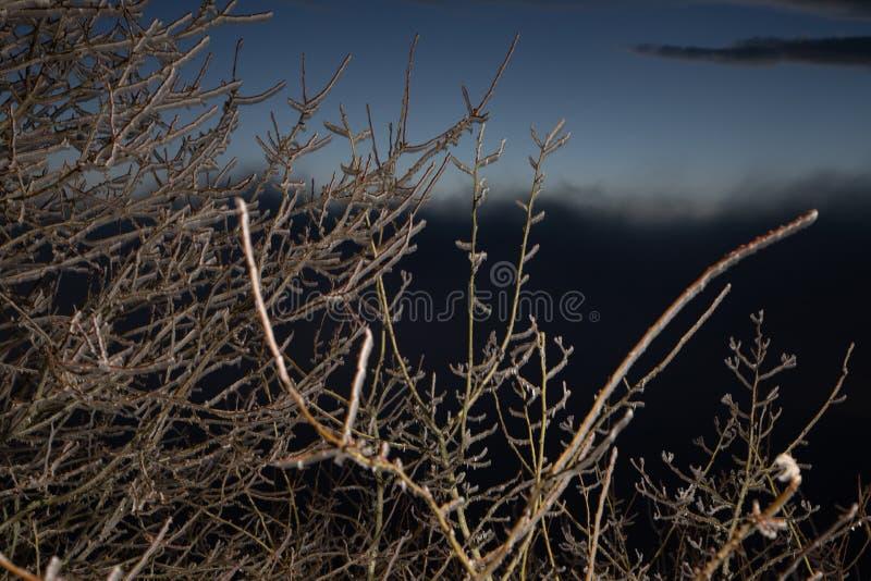 Hård rimfrost, djupfryst landskap för trädvinterunderland Dimma- och mistbakgrund som fryser dimma fuktighet som bildar is arkivfoton