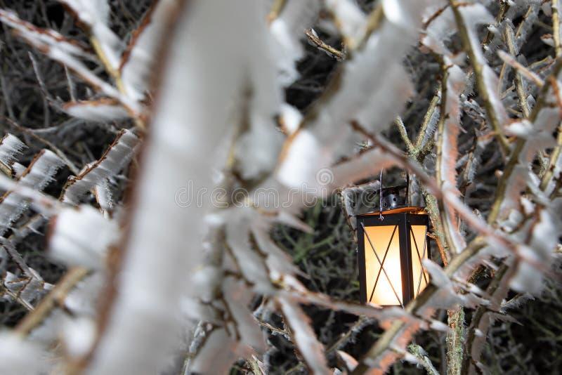 Hård rimfrost, djupfryst landskap för trädvinterunderland med den hängande lyktan Dimma- och mistbakgrund som fryser dimma arkivbilder