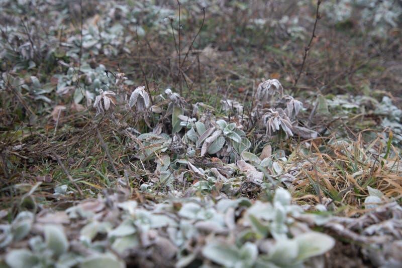 Hård rimfrost, djupfryst växtunderlandlandskap Dimma- och mistbakgrund, djupfrysta sidor och blommor royaltyfria bilder