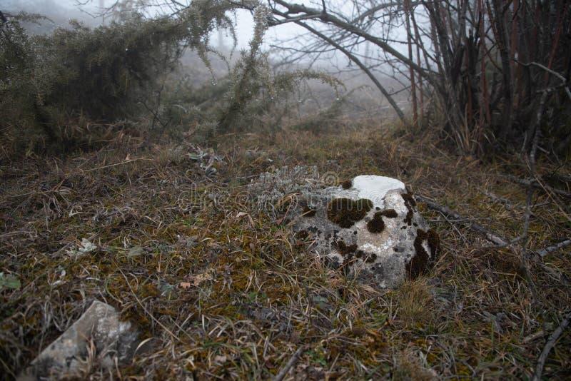 Hård rimfrost, djupfryst växtunderlandlandskap Dimma- och mistbakgrund, djupfrysta sidor och blommor royaltyfria foton