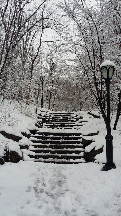 Hård storm av den insnöade Central Park arkivbilder