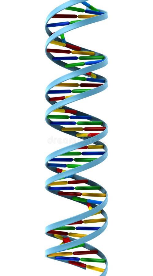 Hélice de la DNA aislada stock de ilustración
