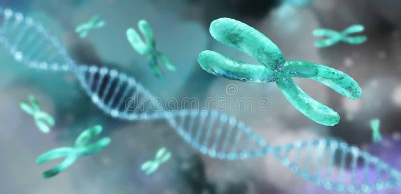 Hélice de la DNA cromosoma stock de ilustración