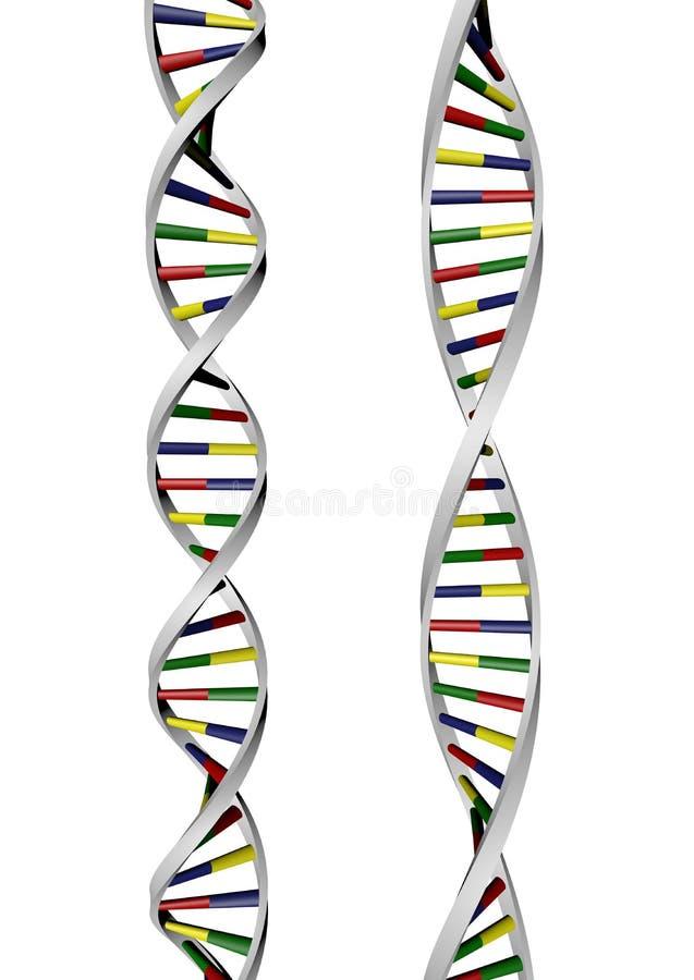 Hélice de la DNA dos stock de ilustración