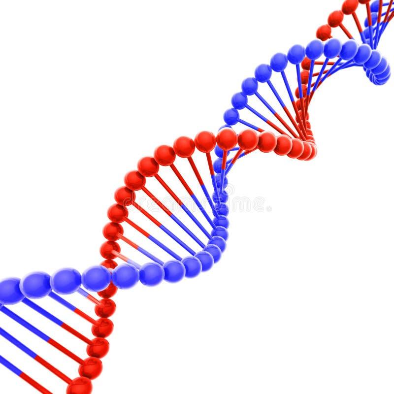 Hélice roja y azul de la DNA en la diagonal blanca imagenes de archivo