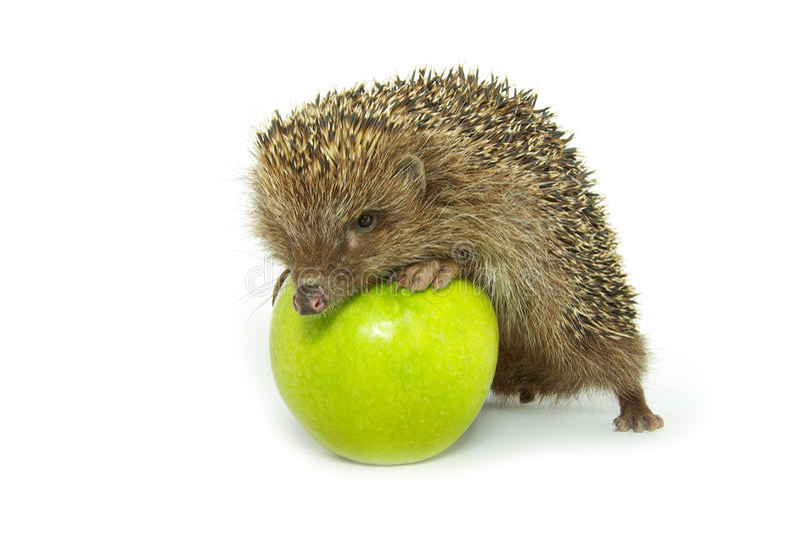 hérisson de pomme photographie stock libre de droits