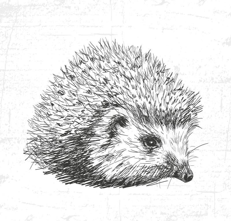hérisson Voyez également les autres ensembles d'animaux illustration stock
