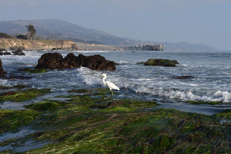 Héron blanc à la plage images stock