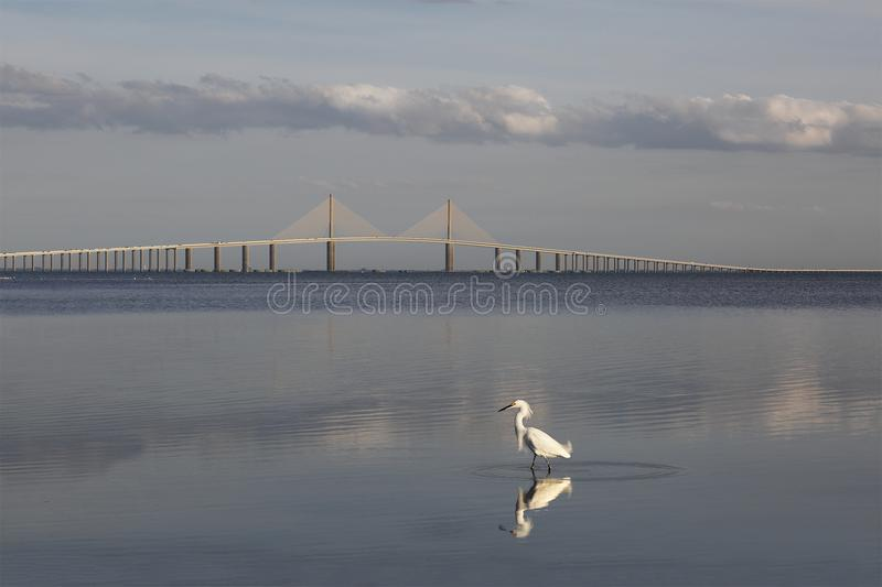 Héron de Milou avec le pont de Skyway de soleil à l'arrière-plan photographie stock libre de droits