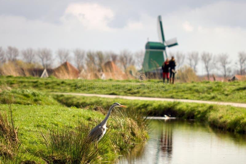 Héron gris dans le paysage de moulin à vent photographie stock libre de droits