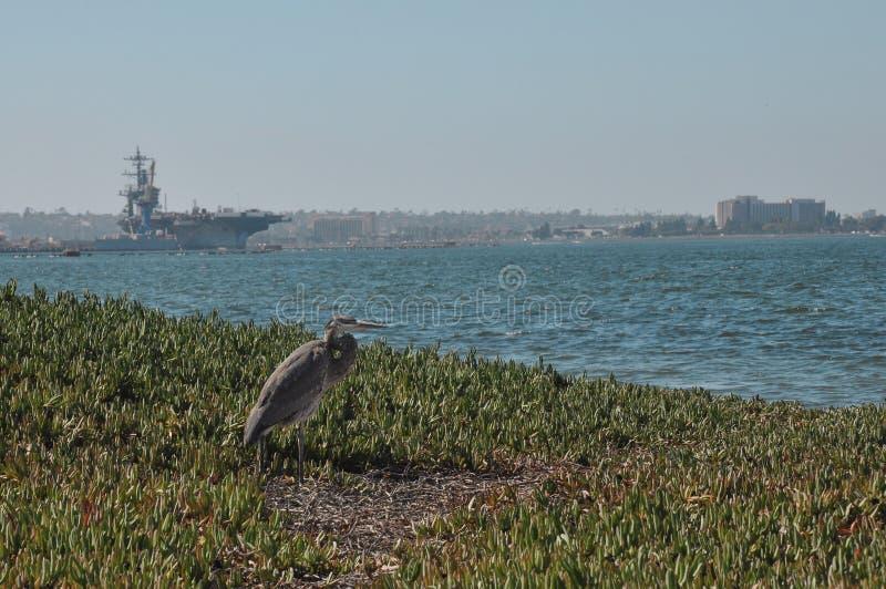 Héron gris sur la plage photographie stock