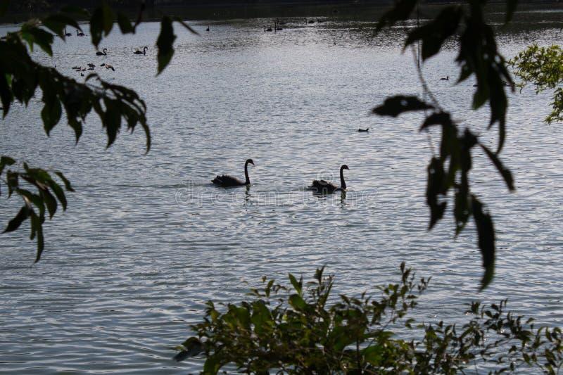 Héron se tenant dans un lac photos libres de droits