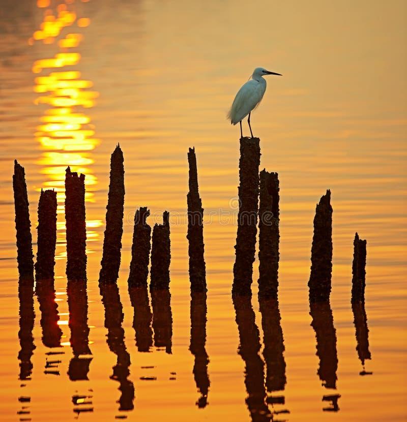 Héron solitaire de coucher du soleil photographie stock libre de droits