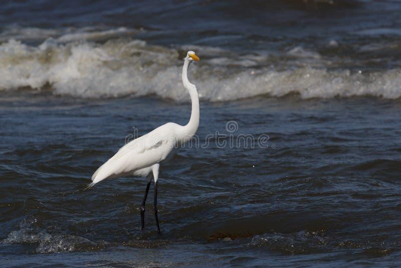 Héron sur la plage de l'île d'Ometepe images stock