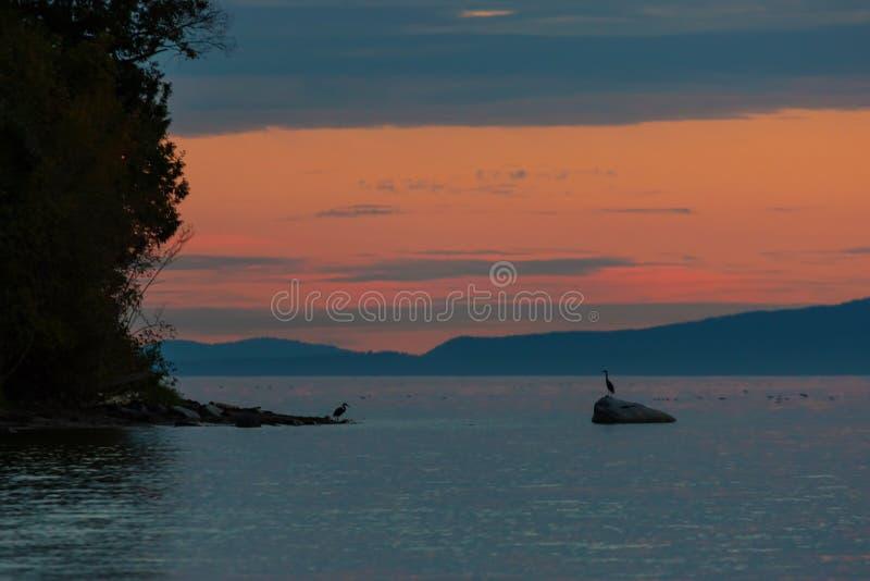 Hérons dans l'éloigné à la baie de Semiahmoo à l'état Etats-Unis du crépuscule WA photos stock