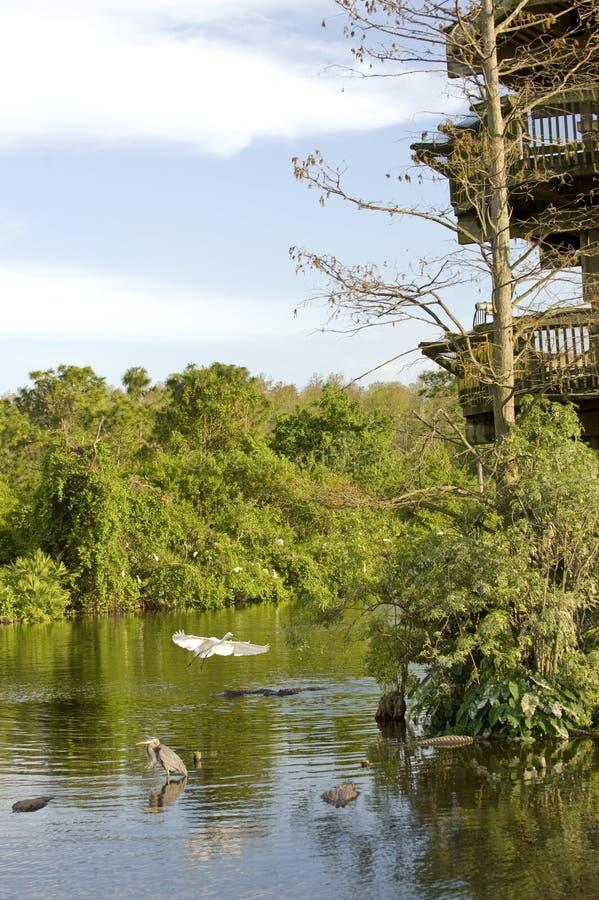 Hérons et alligators image stock