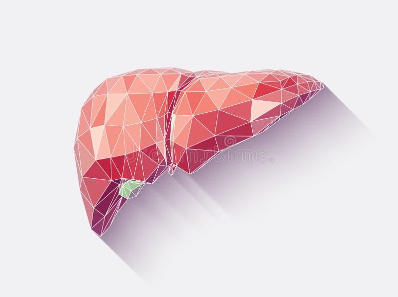 Hígado tallado ilustración del vector