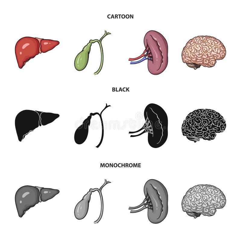 Hígado, vesícula biliar, riñón, cerebro Los órganos humanos fijaron iconos de la colección en la historieta, negro, símbolo monoc ilustración del vector
