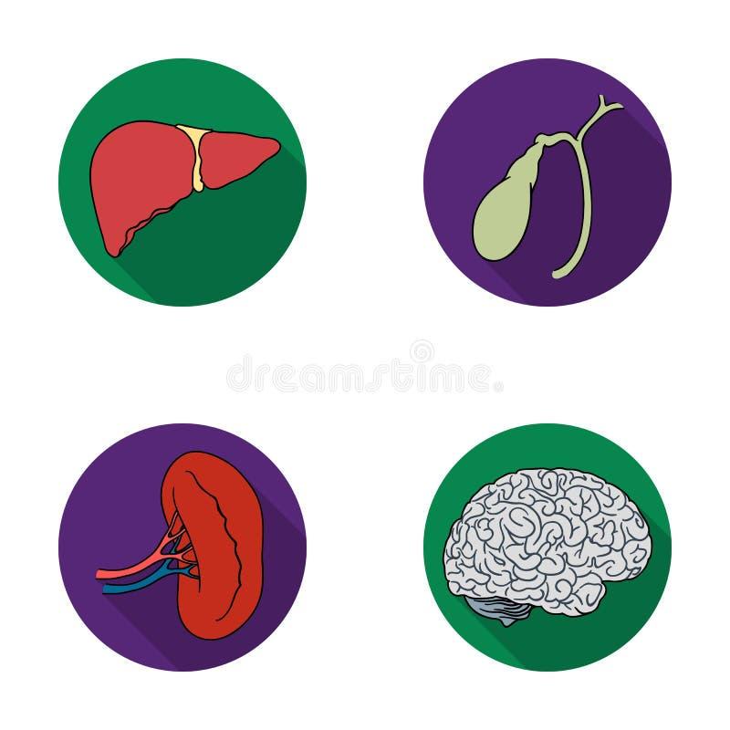 Hígado, vesícula biliar, riñón, cerebro Los órganos humanos fijaron iconos de la colección en web plano del ejemplo de la acción  libre illustration