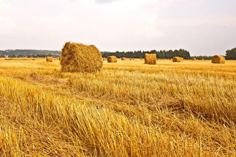 Hö i ett fält arkivfoto